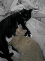 Mãe de gatos
