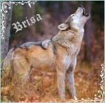 Brisa-14