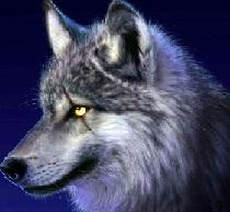 Trueno wolf99