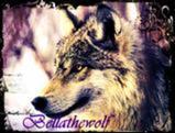 Bellathewolf