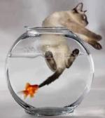 Poste aqui o setup do seu aquário! 373-78