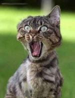 Psyco-cat