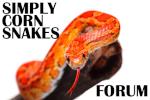 SimplyCornSnakes