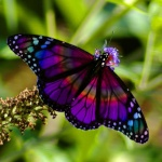 A_BUTTERFLY_JUST#1