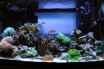 shutterfish