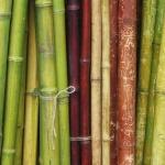 Bambuk_007