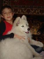 belajavolchiza wolf