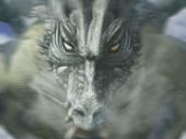 dragonmax
