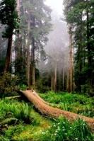ظل الشجرة