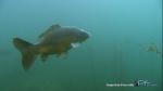 Le poisson 4051-3