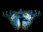 *Butterfly*