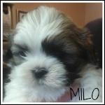 Milo's Mummy