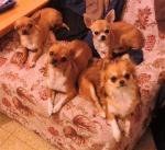 Что нужно знать ДО покупки щенка 2855-43