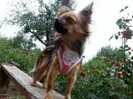 Что нужно знать ДО покупки щенка 4406-14