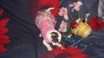 Что нужно знать ДО покупки щенка 5691-3