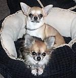 Что нужно знать ДО покупки щенка 589-73