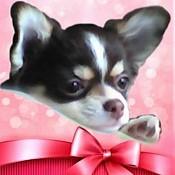 Что нужно знать ДО покупки щенка 6429-8