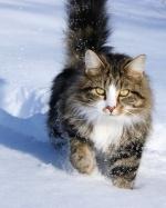snowcat421