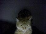 The Kittycat