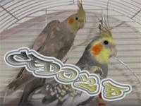 ced025