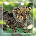 Lena_Panthera