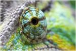 Reptile Fan