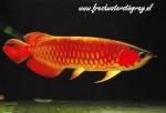 fishhomie