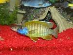 fish head 378