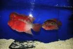 fabfish