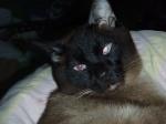 KittyLy