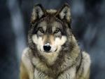 werewolf92