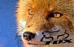 FoxRC
