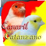 Catanzano