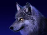 الذئب الاسود