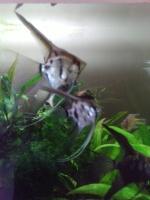 Lilfishy