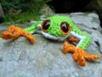 Žaba Zelena