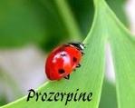 proserpine83