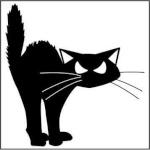 gatoescaldado