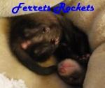 FerretsRocket