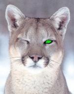 Cougarpride
