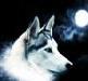 Da_Wolf