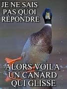 :canard: