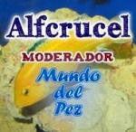 alfcrucel
