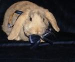 Олик-кролик