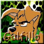 Golfillo