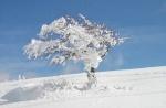 Snowwman