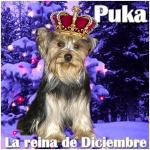 duney_puka