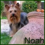 Lorena y Noah