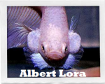 Albert Lora