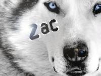 The Zac